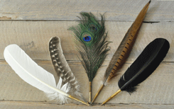 Wedding Guest Book Pens - Feather Quills