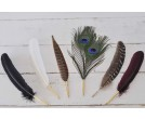 Feather Quill Pens